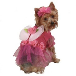 Flower costume for dogs