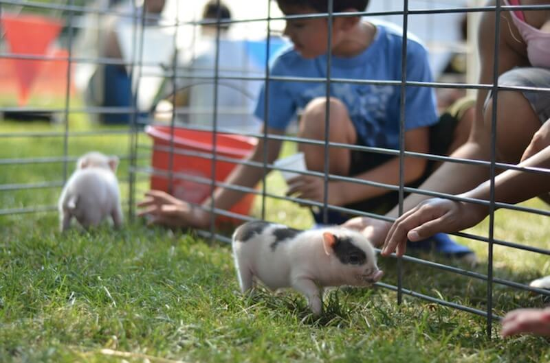 Peppa Petting Zoo